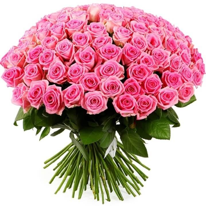 Заказать цветы розы 101, цветы многолетние оптом