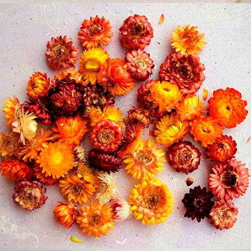 сухоцветы для эпоксидной смолы