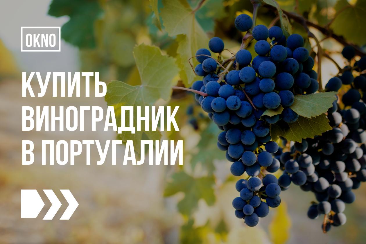 купить виноградник португалия
