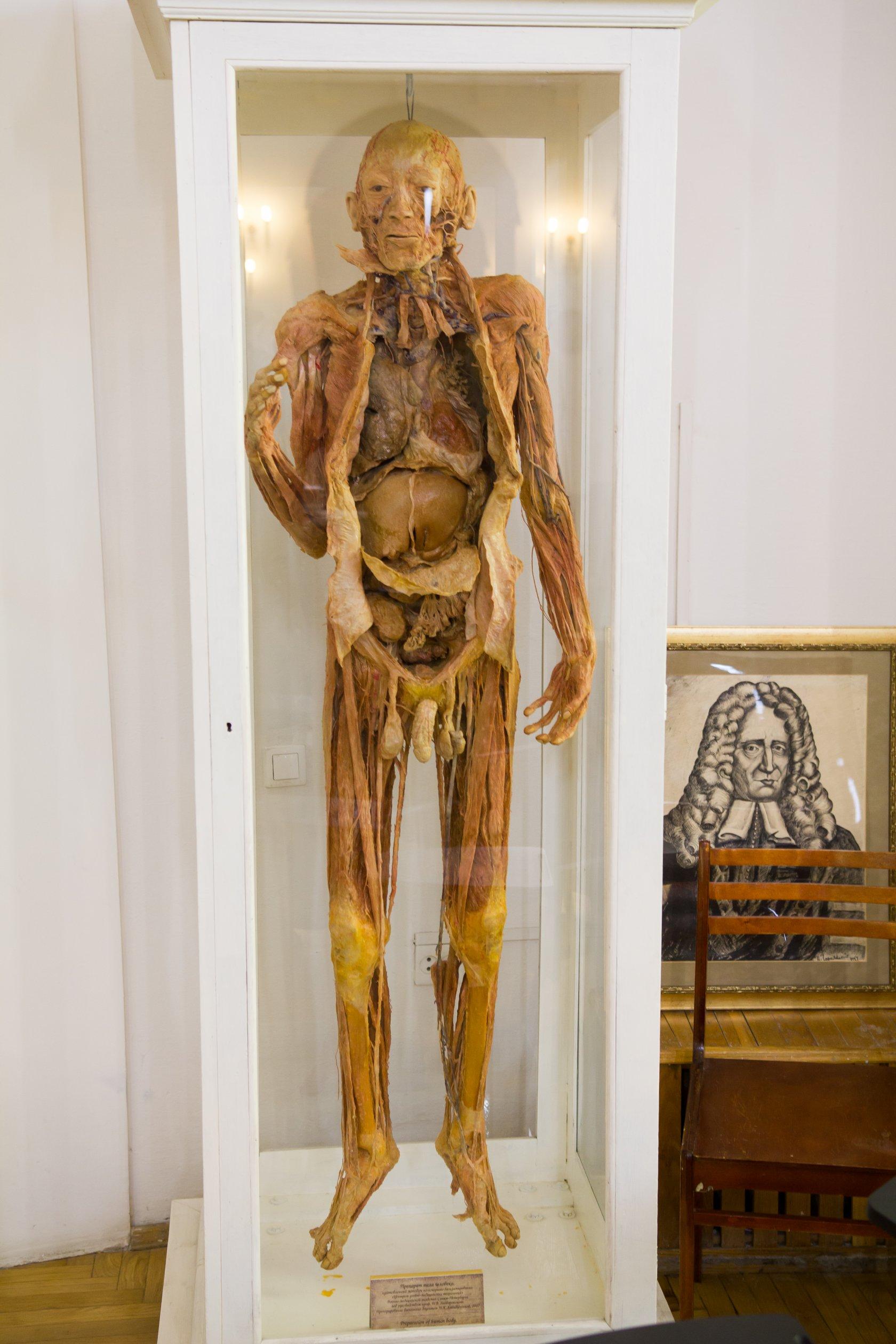 казань анатомический музей театр фото этого британского актера