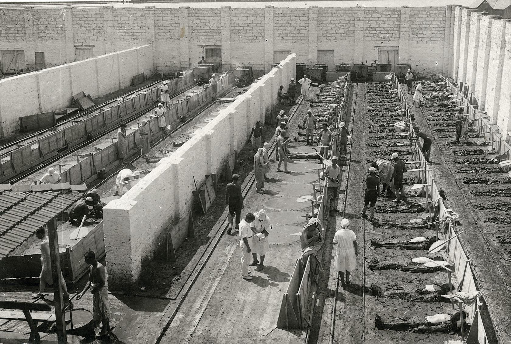 Грязелечебница, курорт Саки. Крым, август 1932 года