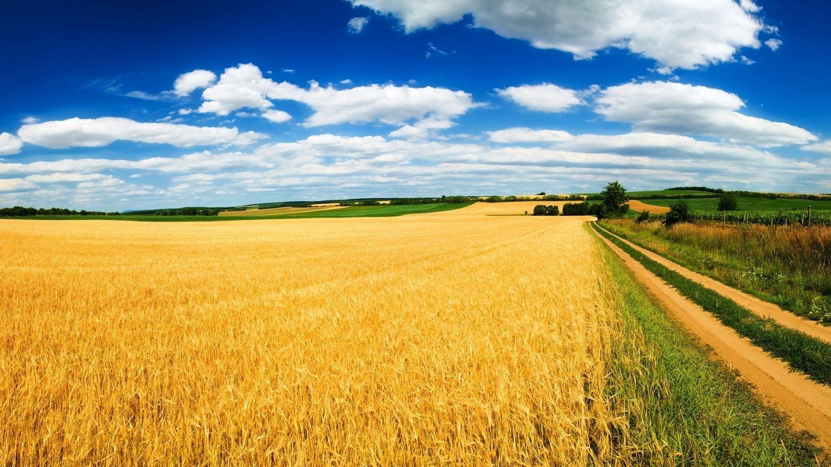 Плодородная земля Украины - фото