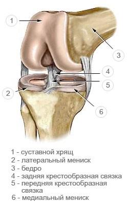 Дегенерация хряща, связок капсул суставов связки в коленном суставе