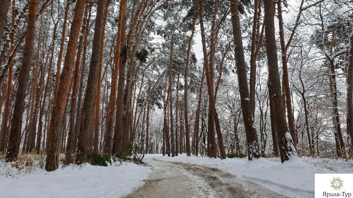 Лес осенью - 6