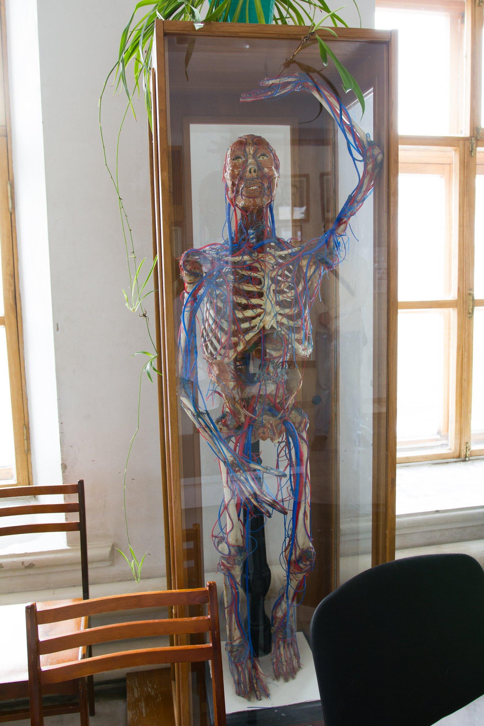 Казань анатомический музей театр фото