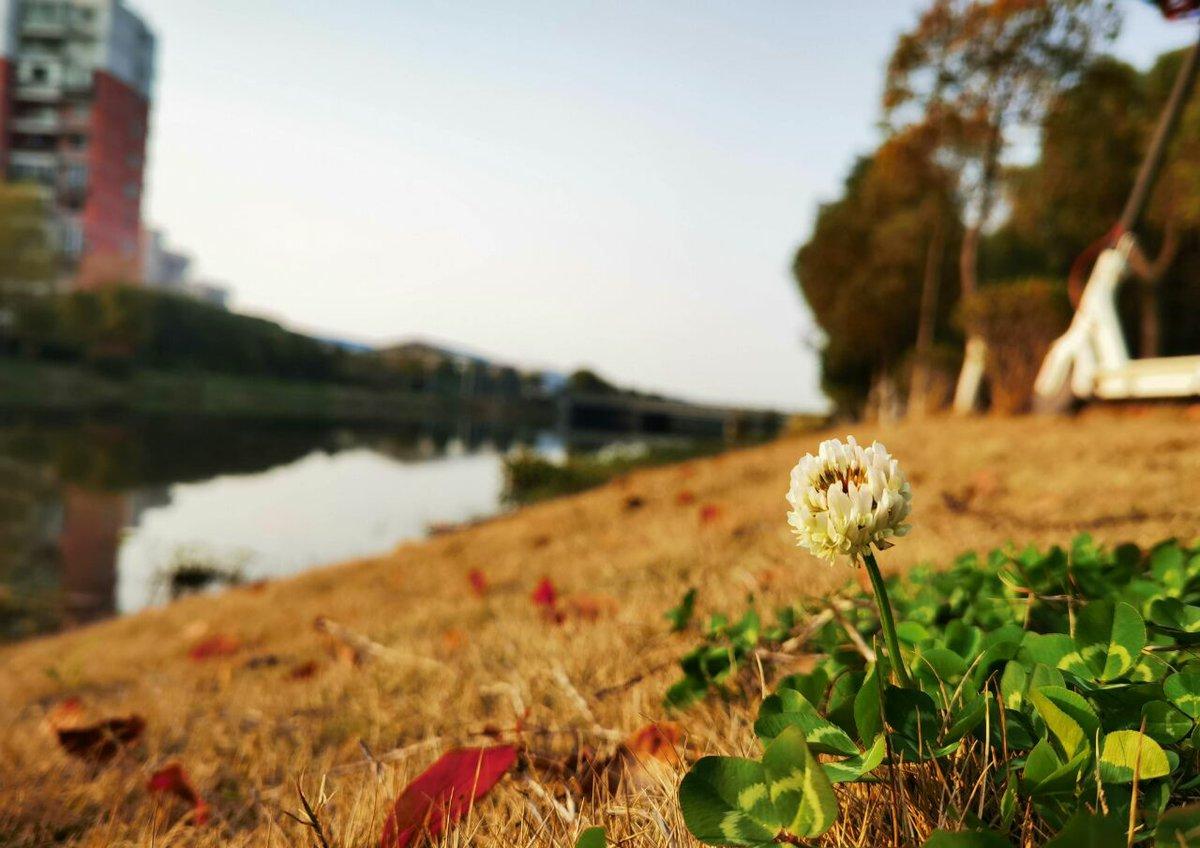 Фото снято на Huawei P40 Pro