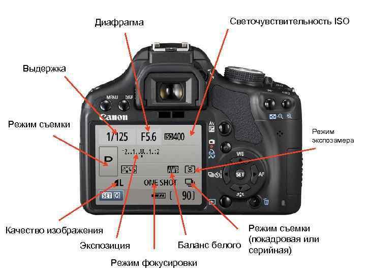 как научиться фотографировать профессионально самостоятельно на фотоаппарате