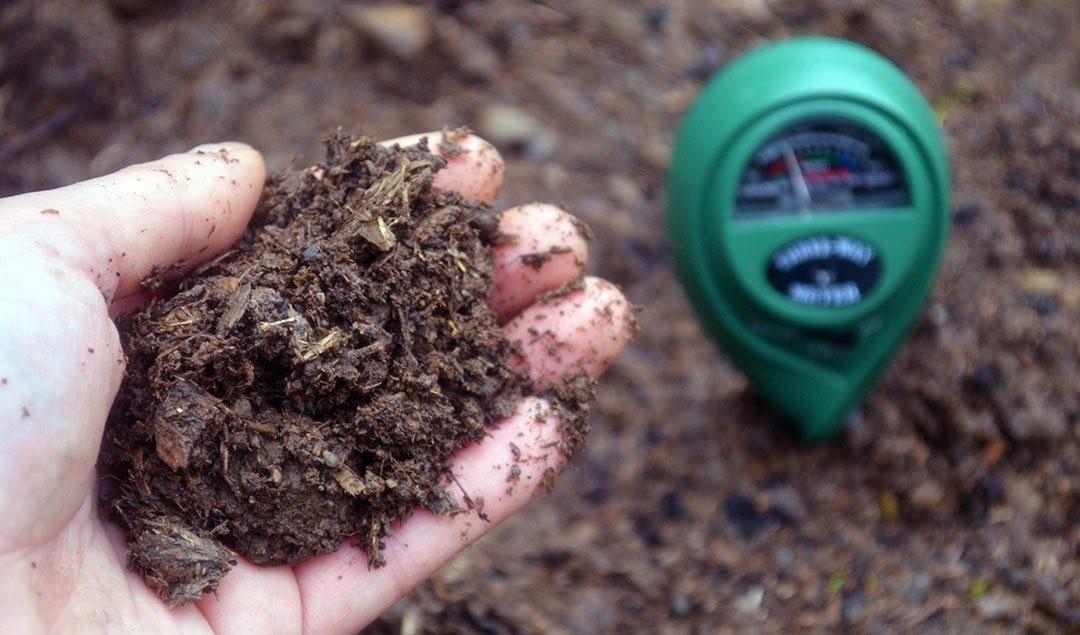 При выращивании голубики Патриот регулярно измеряют и корректируют кислотность почвы!