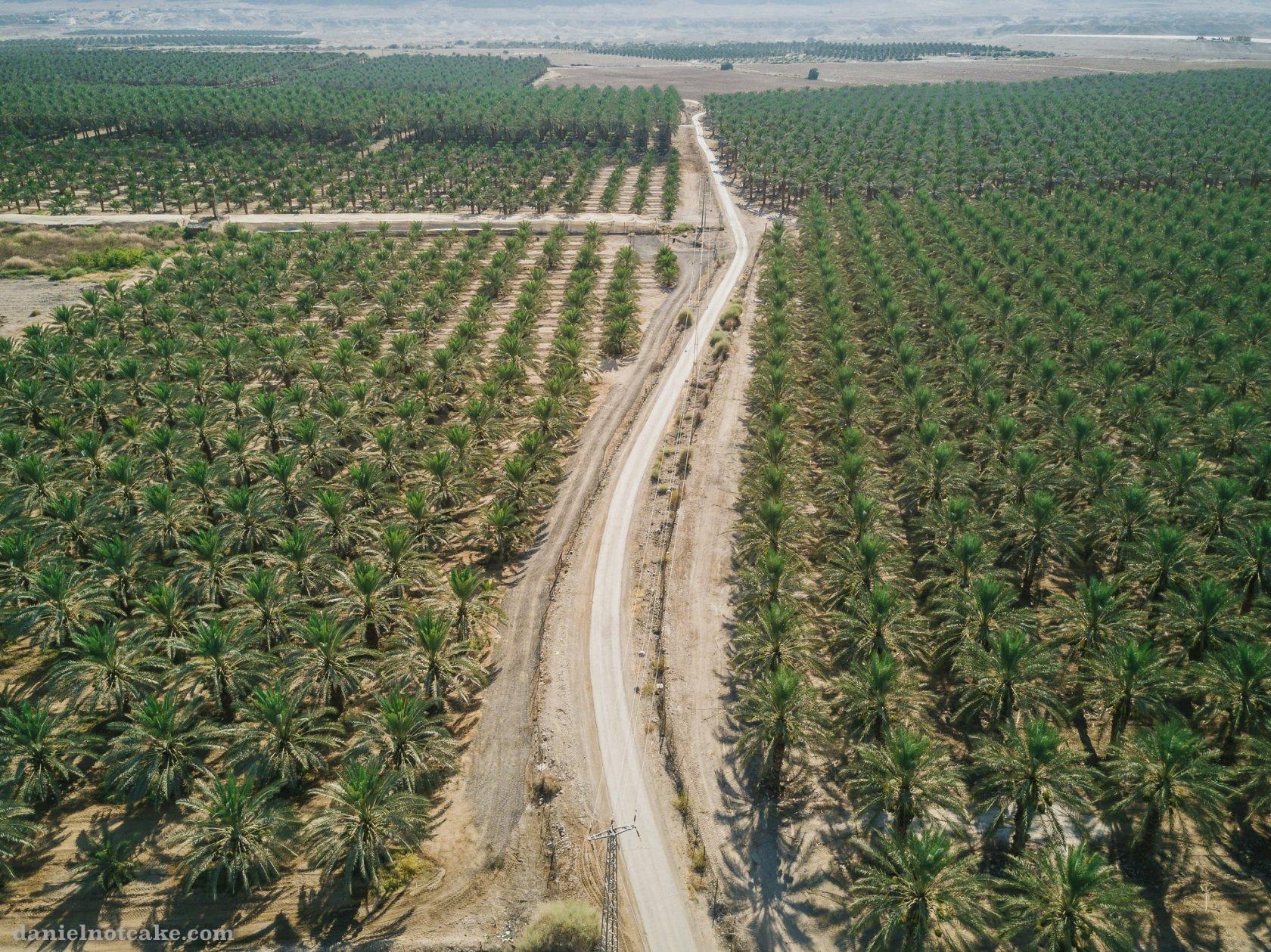 израиль фото плантаций сколько вам было
