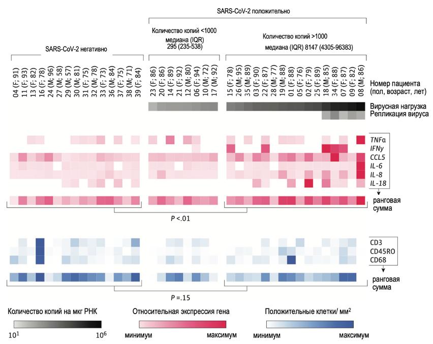 РНК SARS-CoV-2