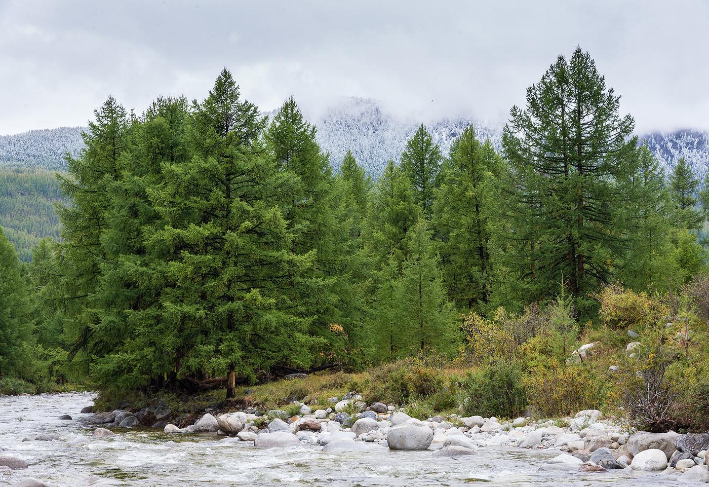 было фото лиственничный лес дома