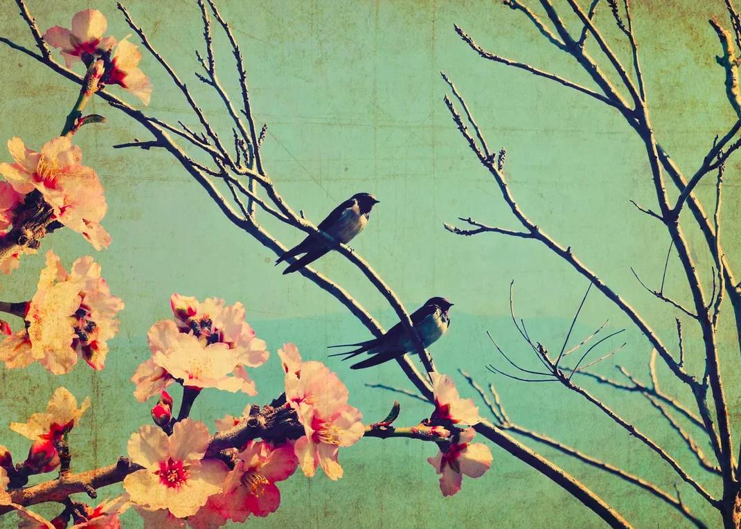 Постер с птицами фото