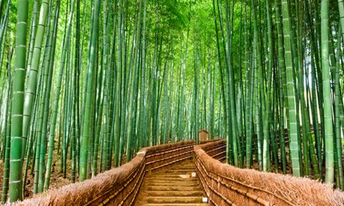 Тропинка в бамбуковом лесу Арасияма