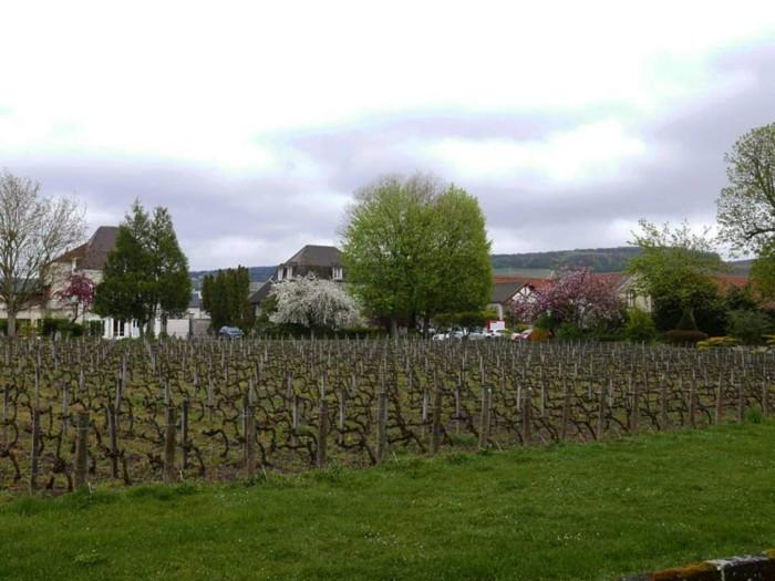 Jacquesson vineyard