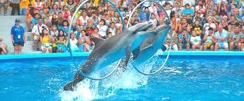 Дельфинарий Мемо в Джубге