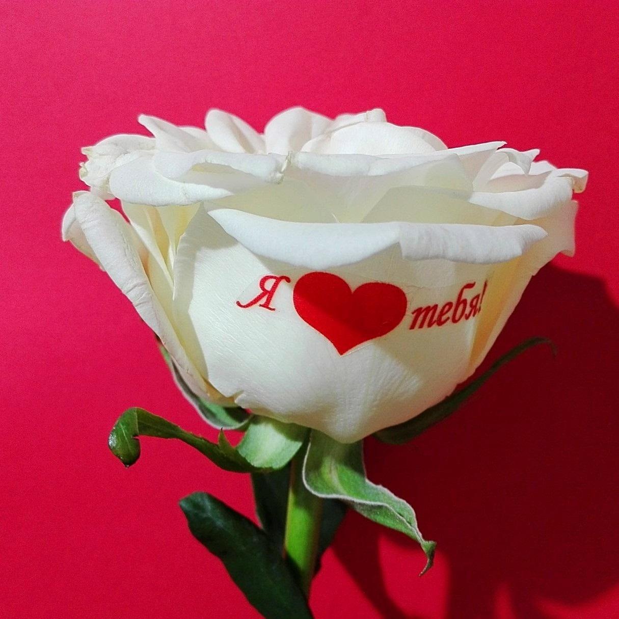 Картинки с розами с надписями жене, спасибо лилиями красивые