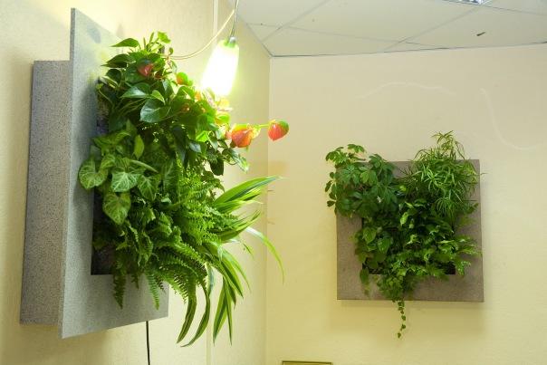 Фитостены - экологическая безопасность квартиры или дома