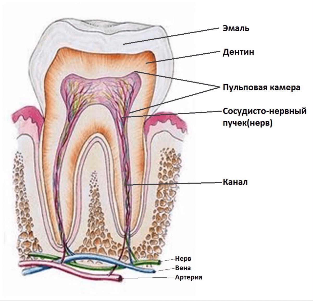 лечение зубов краснодар