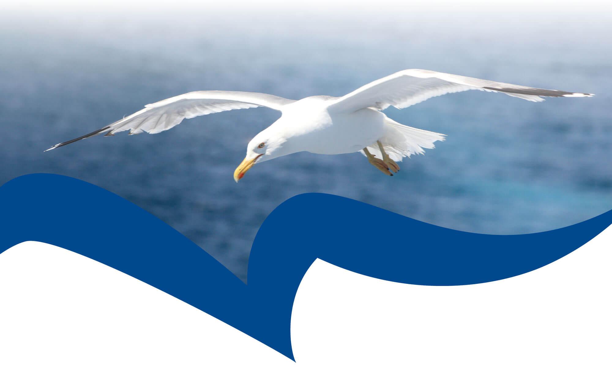 Чайка - символ безграничных возможностей