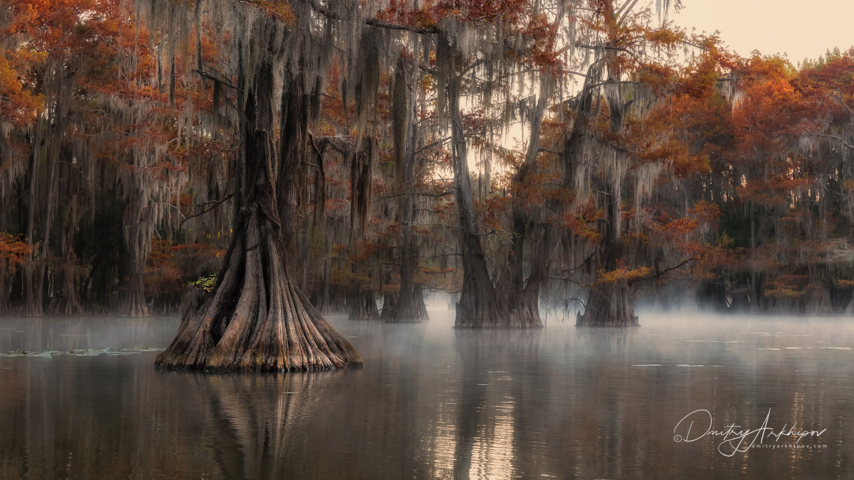 Photoexpedition to the Cypress Swamps. USA