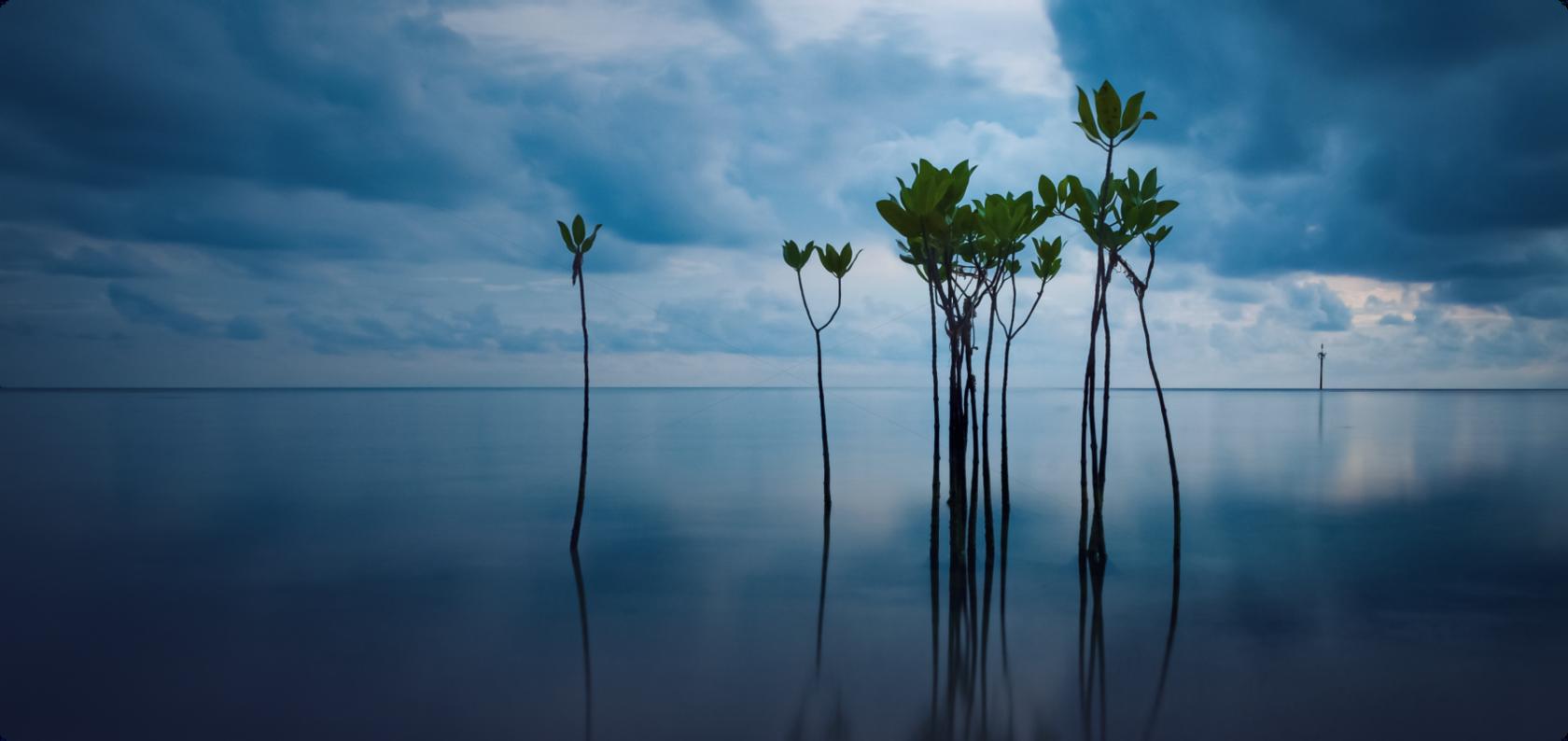 Myanmar Blue Carbon project from Dr Arne Fjørtoft