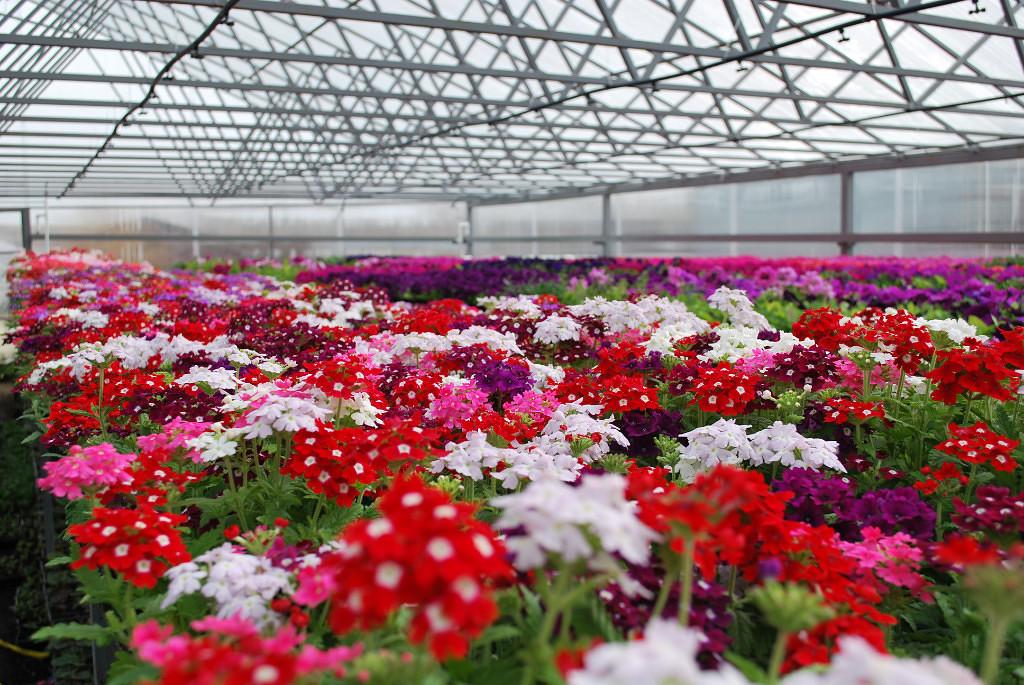 Букет для, москва оранжереи купить цветы оптом