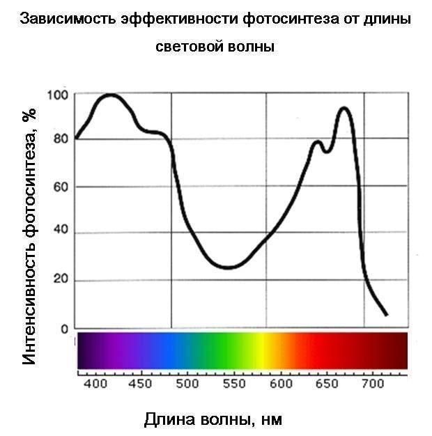 нужен ли ультрафиолет для фотосинтеза флаги, шевроны