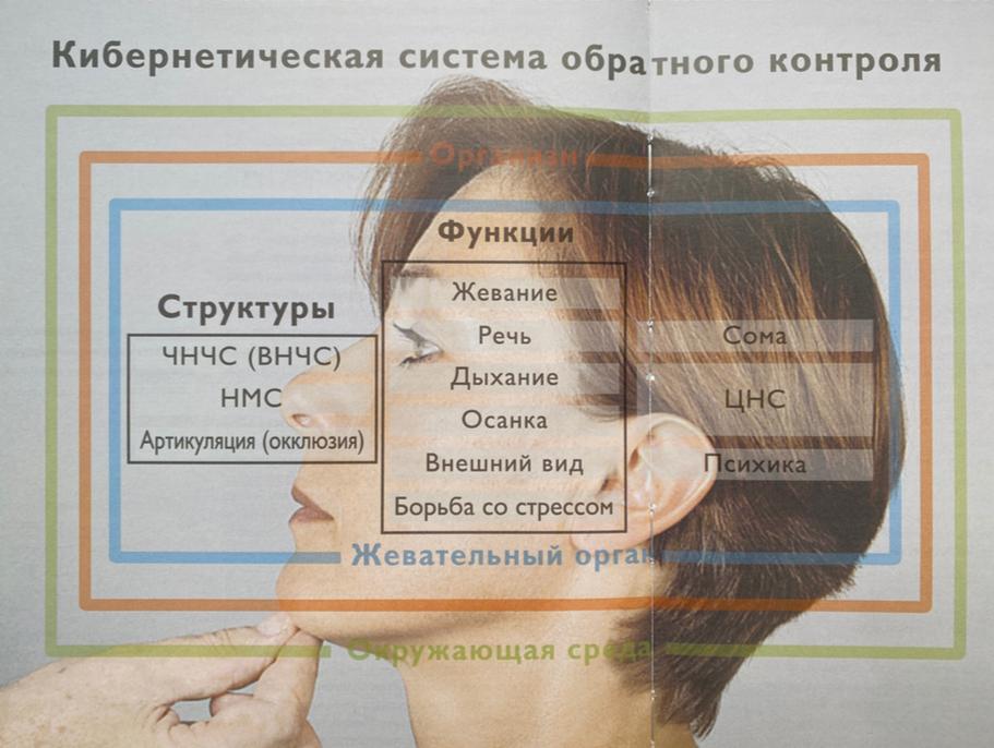 Кибернетическая система жевательного органа