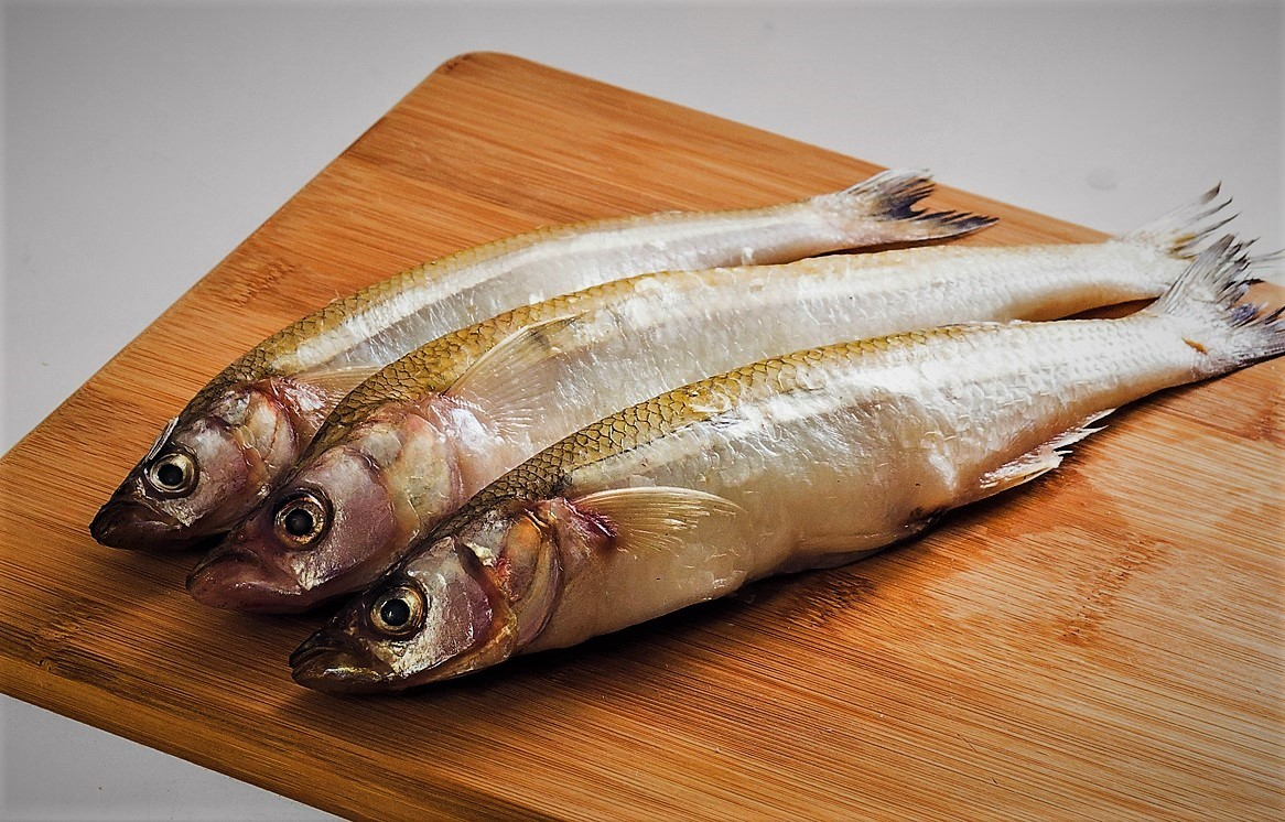 Корюшка что за рыба