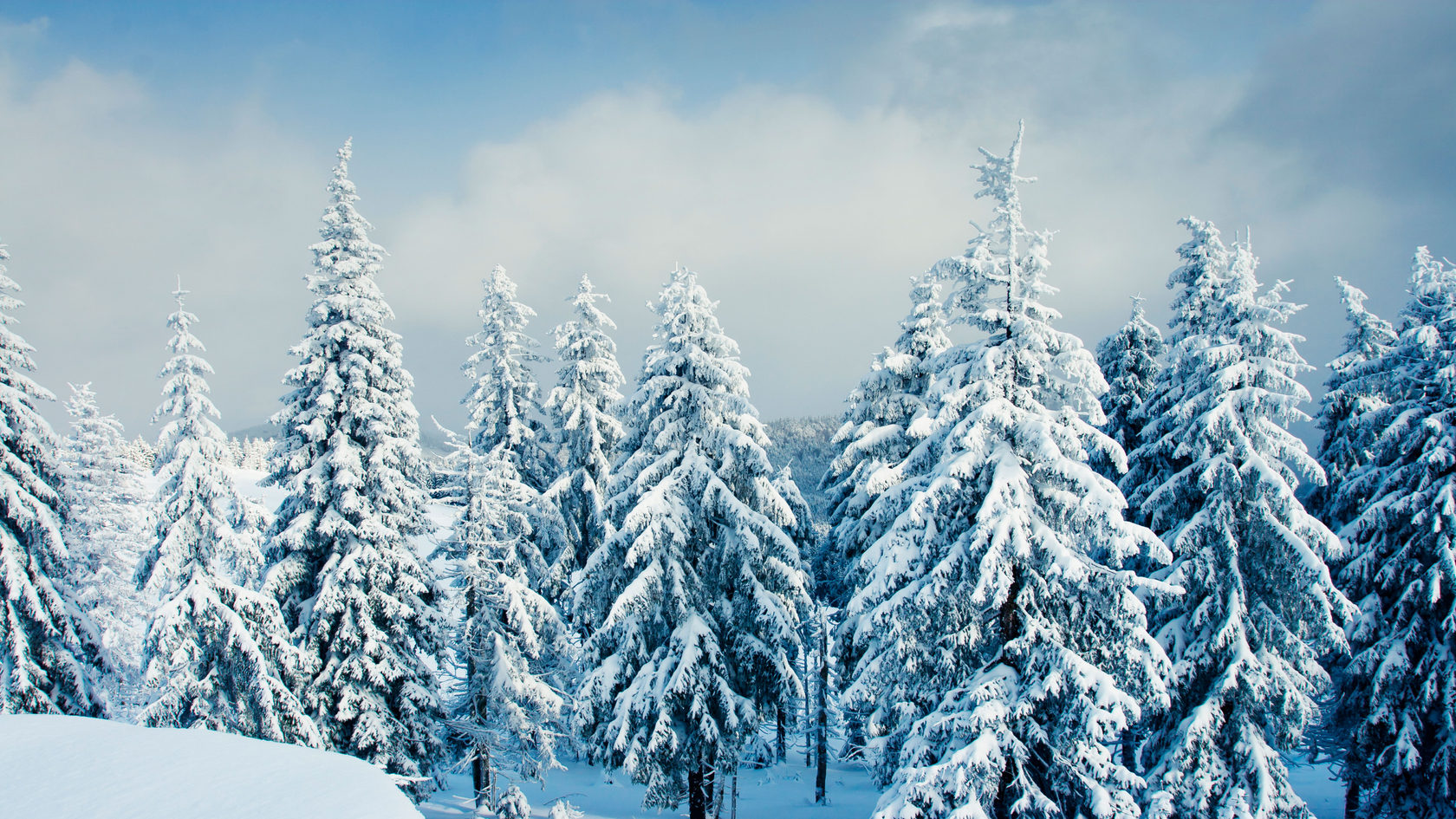 Постеры зимний лес