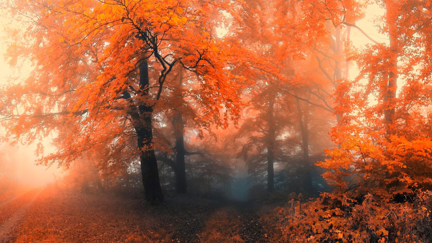 запутаются, картинки осень природа на рабочий стол хорошее качество секретарша стоит голая