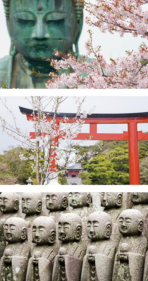 Вид статуи Большого Будды в Камакуре через ветку сакуры