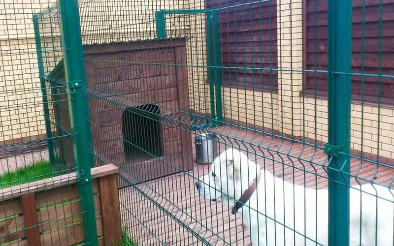 3D забор в качестве вольера для животных