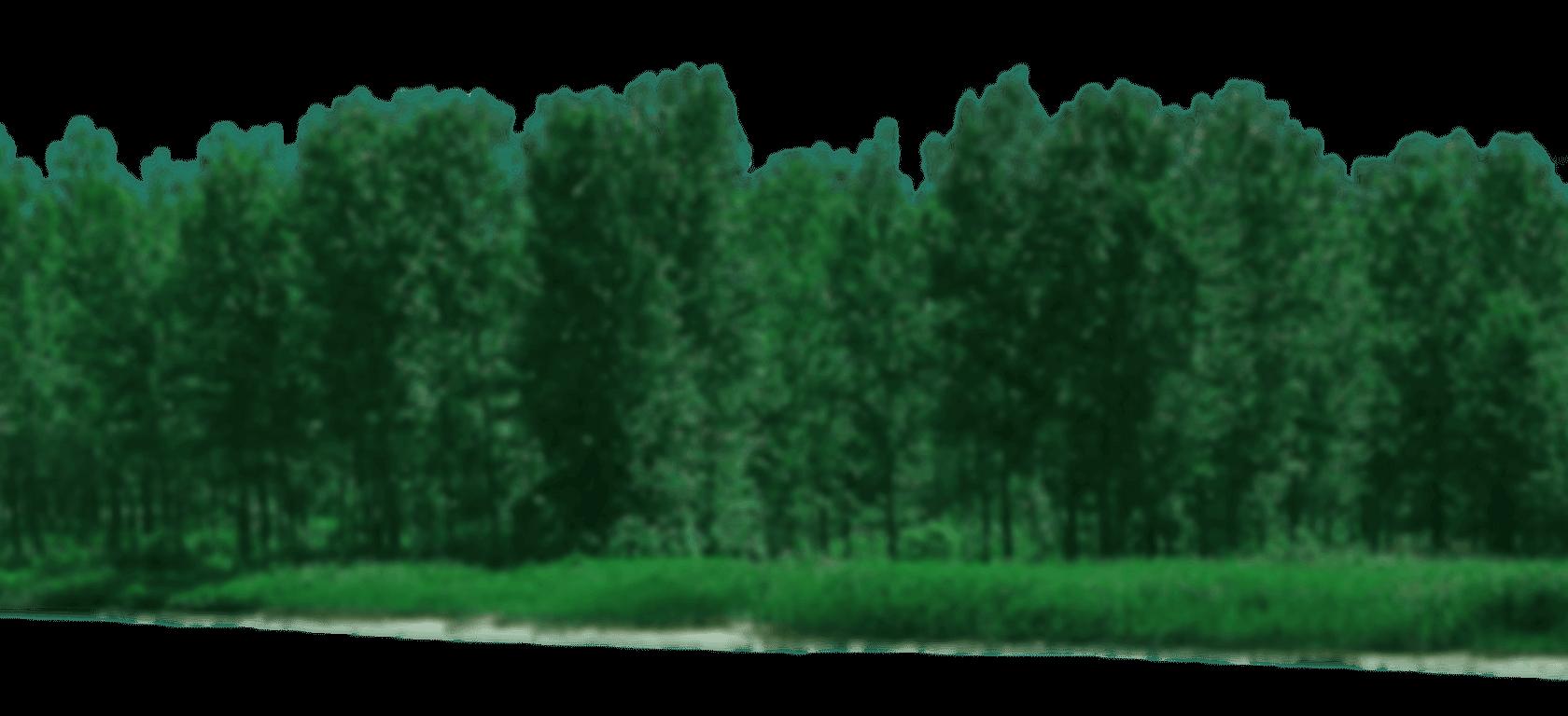 Latgales meži