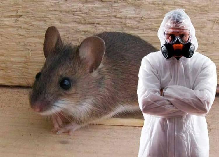 Уничтожение мышей и крыс в Риге, Юрмале, Елгаве, Олайне, Саласпилсе.