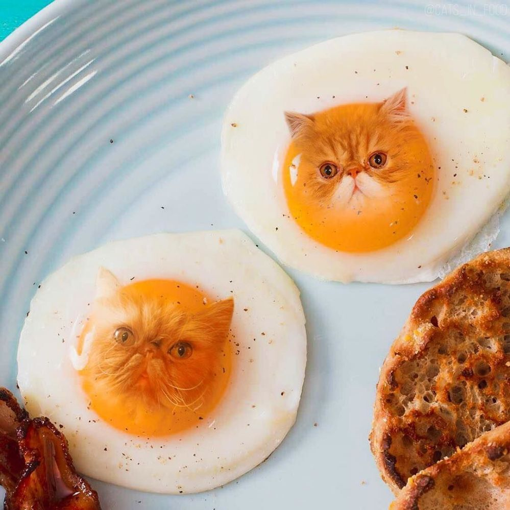 коты и еда