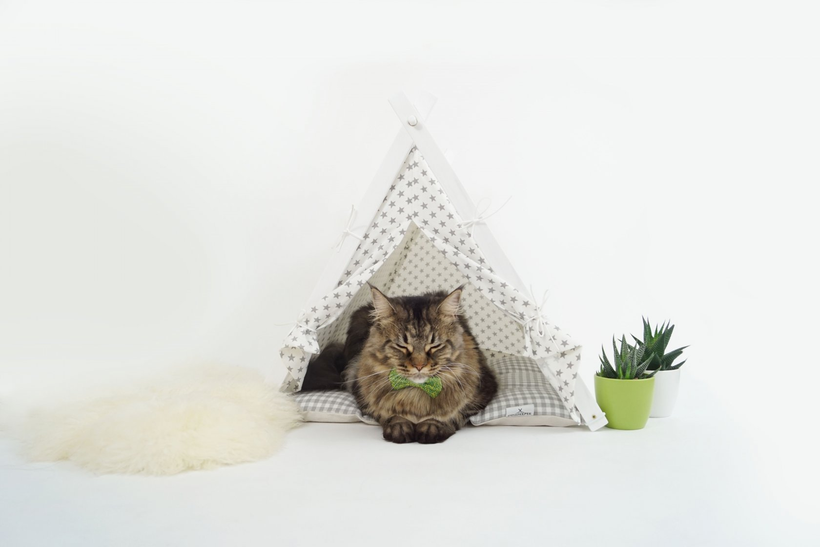 Cat sleeping in the tipi