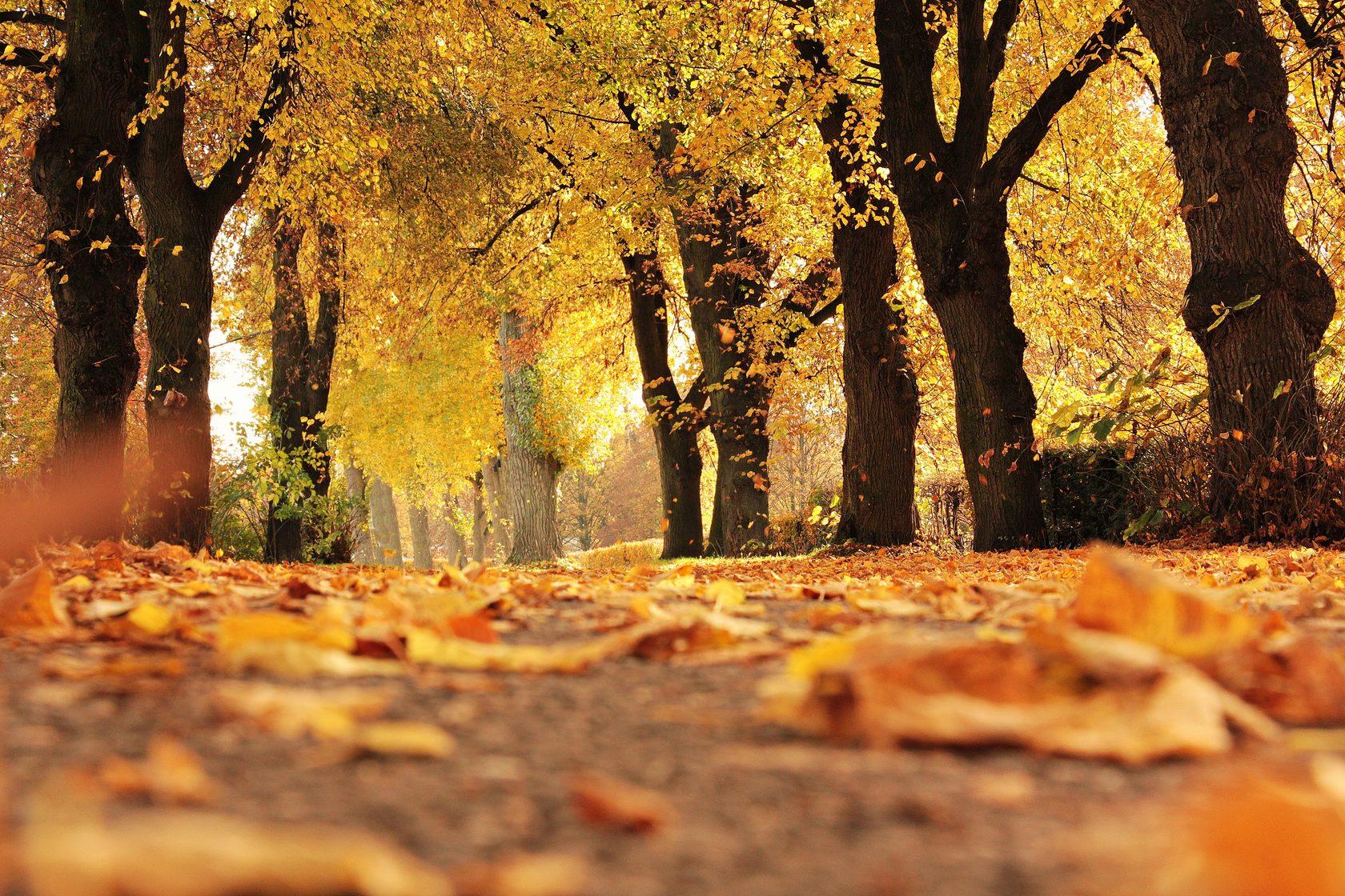 художница сша фото осень золотая хорошем качестве покажем расскажем как