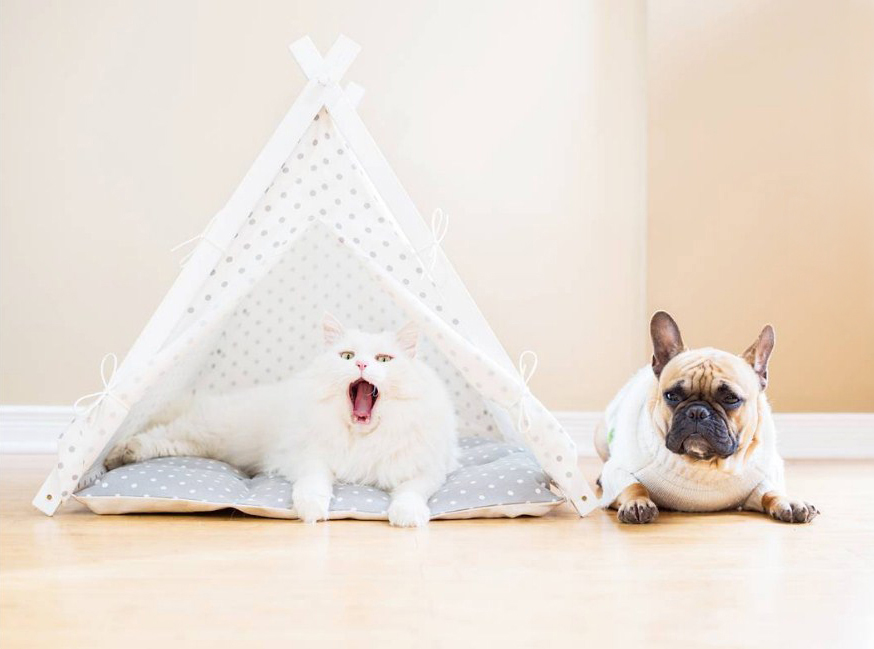 Cat and french bulldog in a dog bed