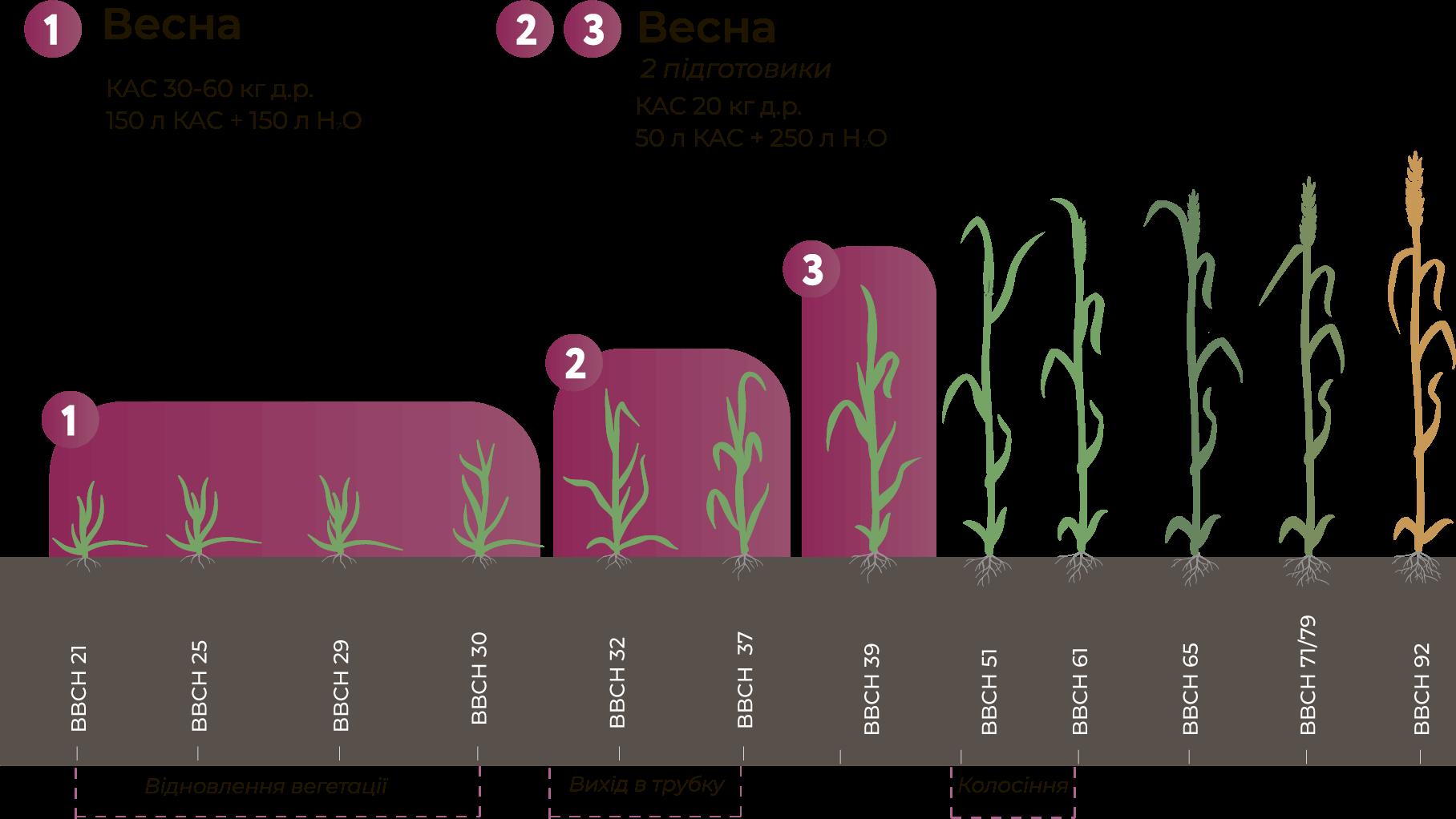 Норми внесення КАС при вирощуванні озимої пшениці, Нормы внесения КАС при выращивании озимой пшеницы