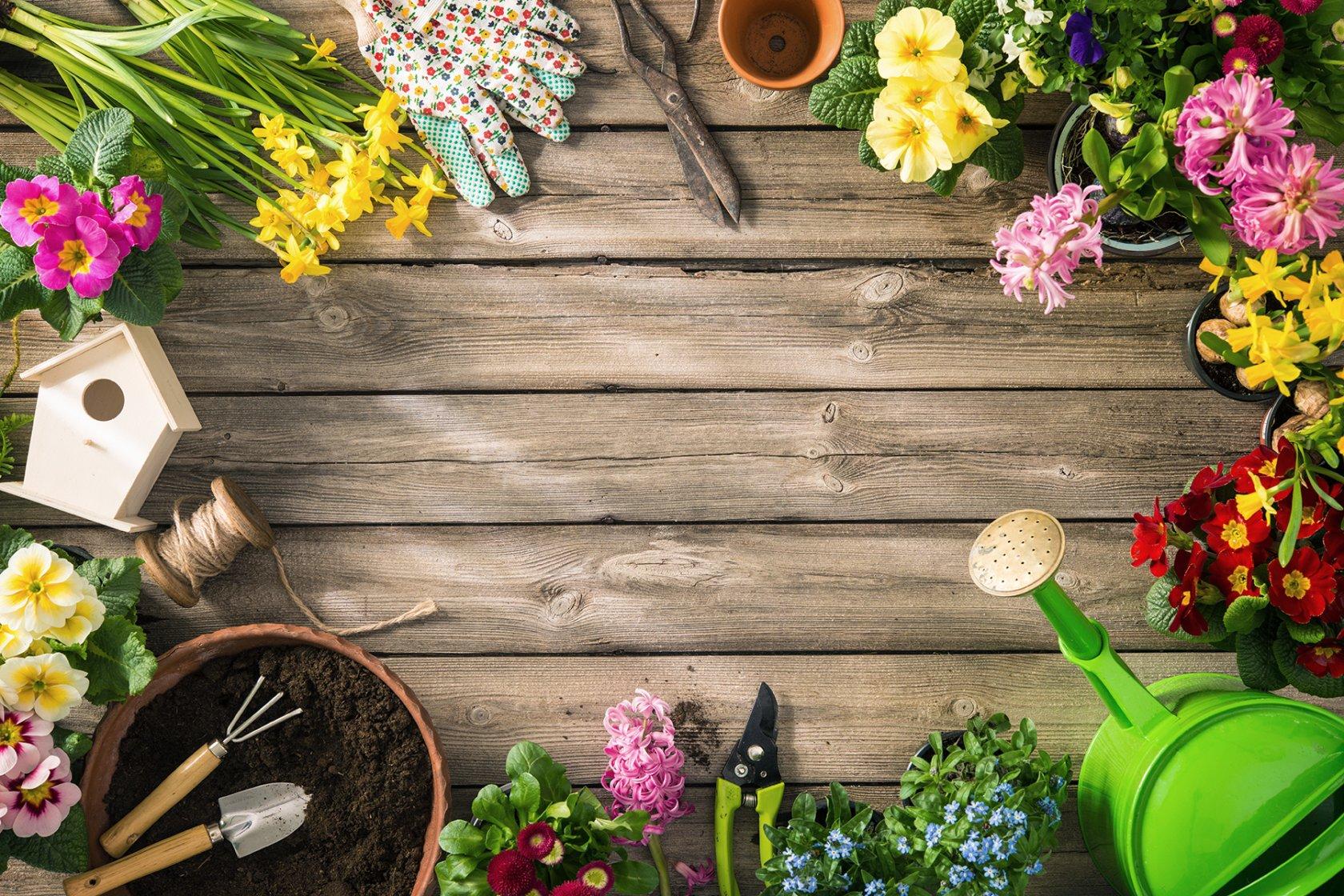 Свежие цветы оптом в чебоксарах, какое количество цветов можно подарить девушке
