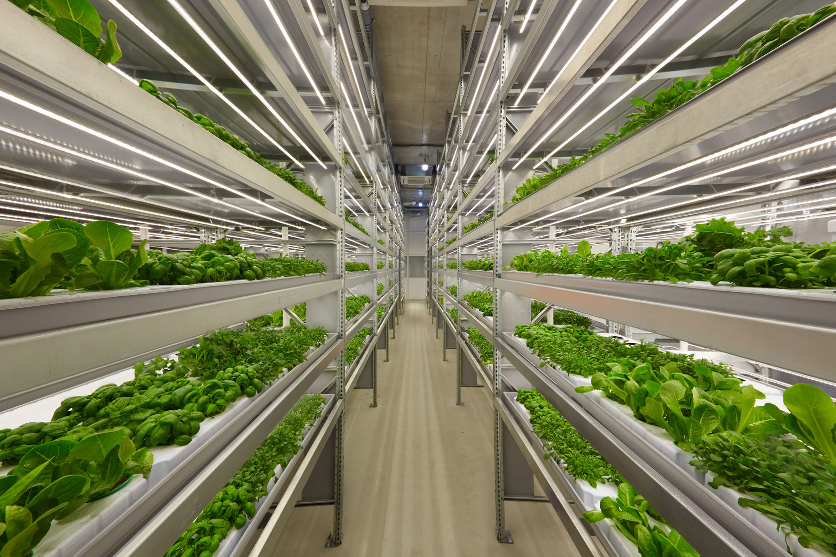 Vertical farm (salads), showroom Novosibirsk, Academgorodok