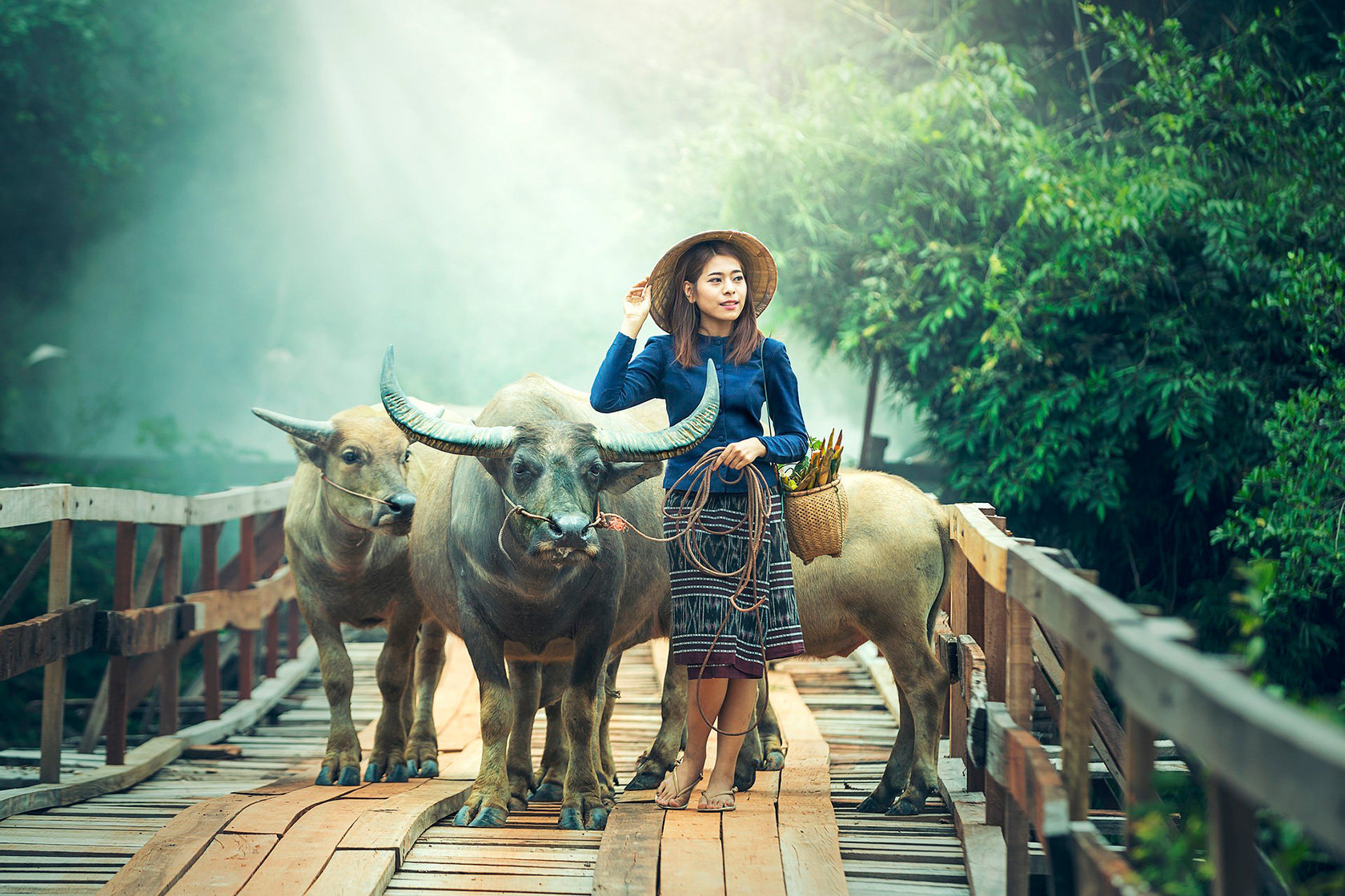 Xiapu, the girl with the bulls, China