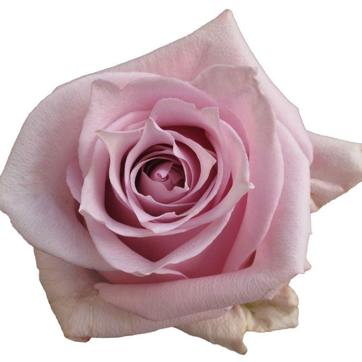 Заказать розы оптом