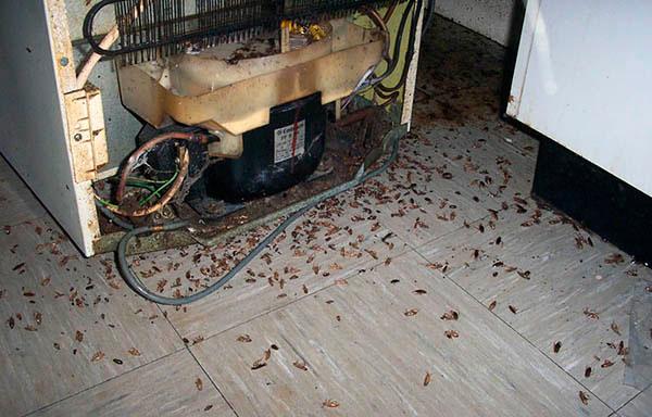 Много тараканов в доме