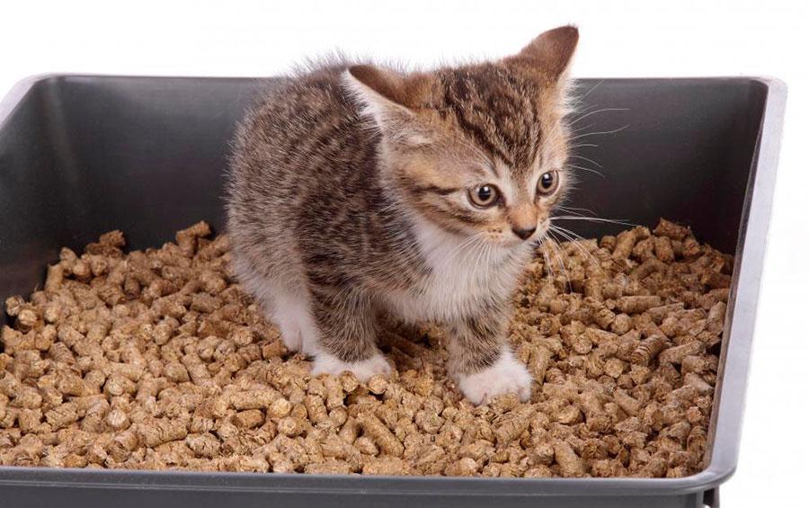 как приучить котенка к имени