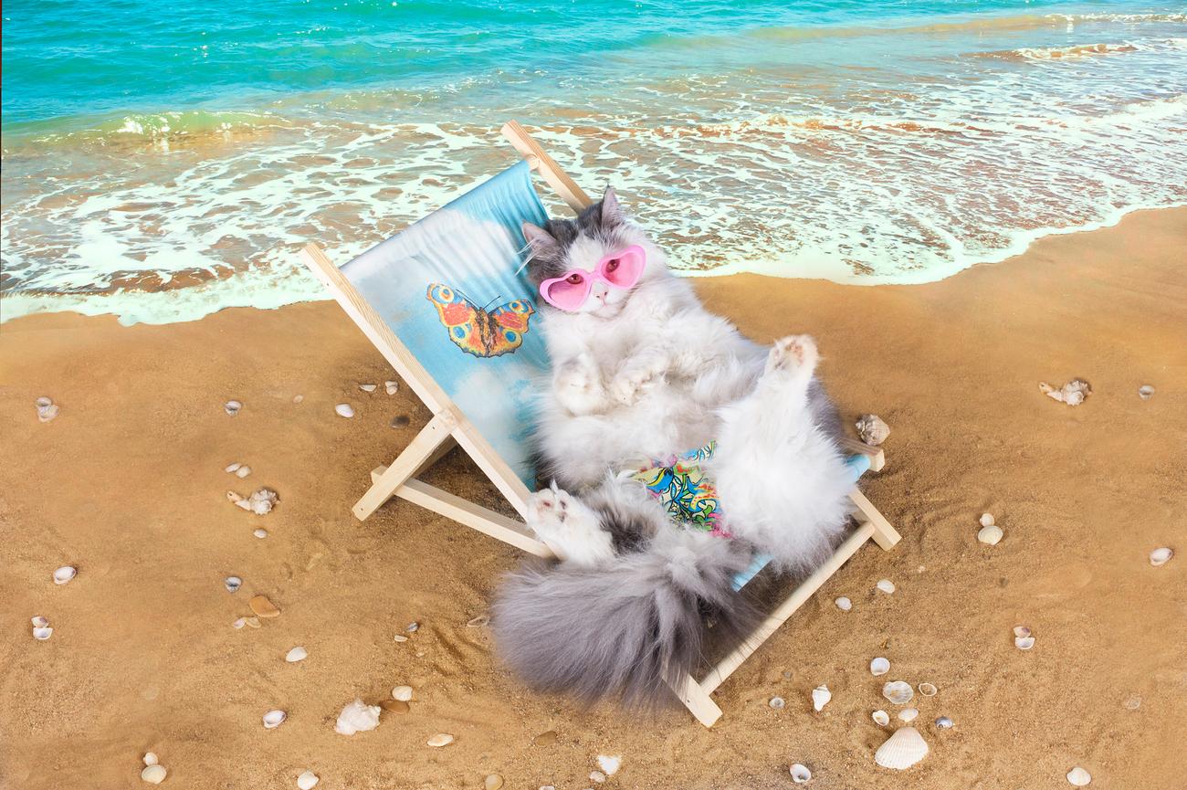 действительно кошка отдыхает картинки прикольные актеры снялись