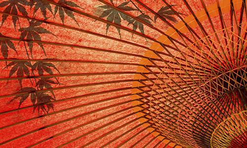 Листья клена просвечивают через японский зонтик