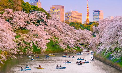Прогулочные лодки в парке Уэно в окружении сакуры