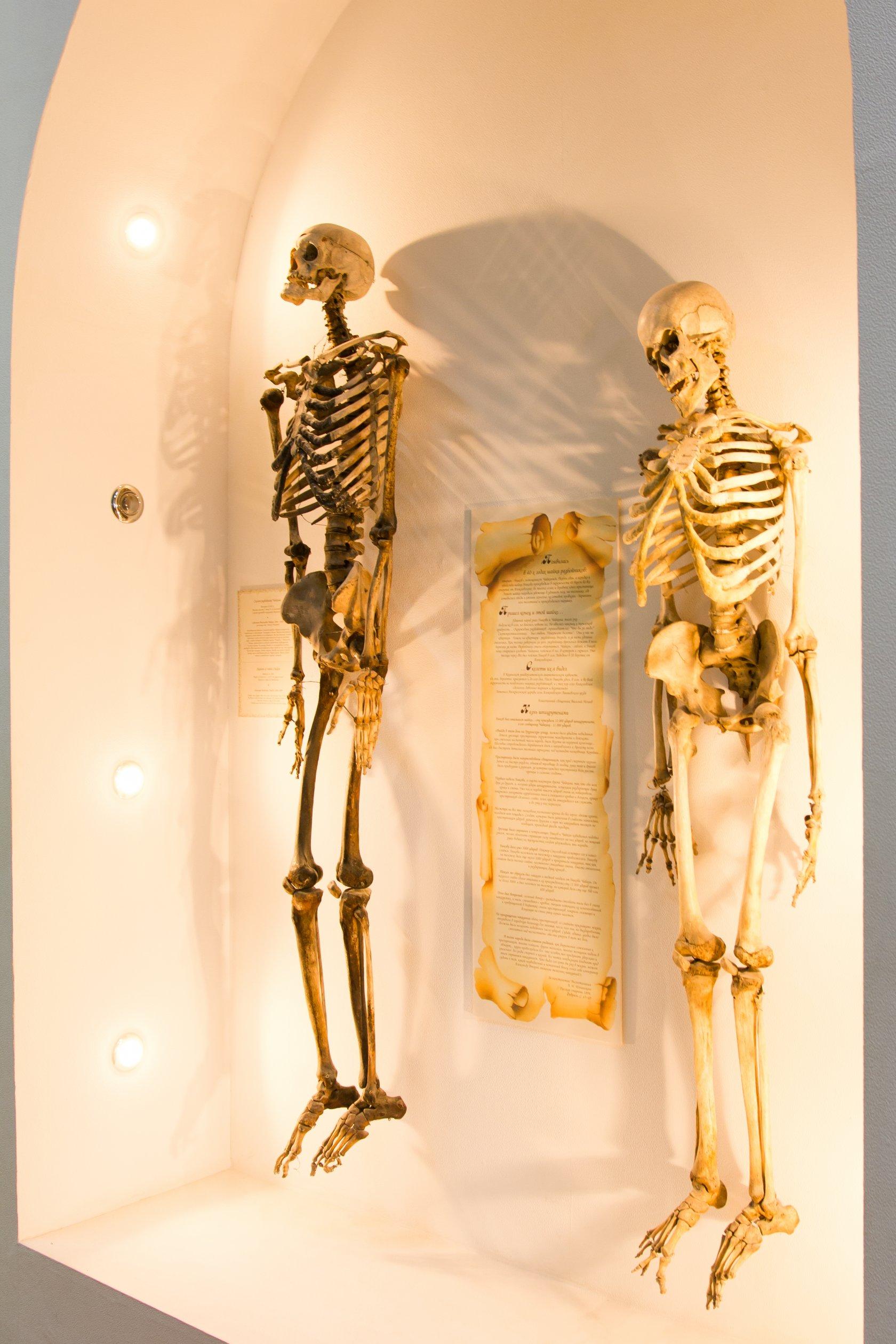 казань анатомический музей театр фото опирается